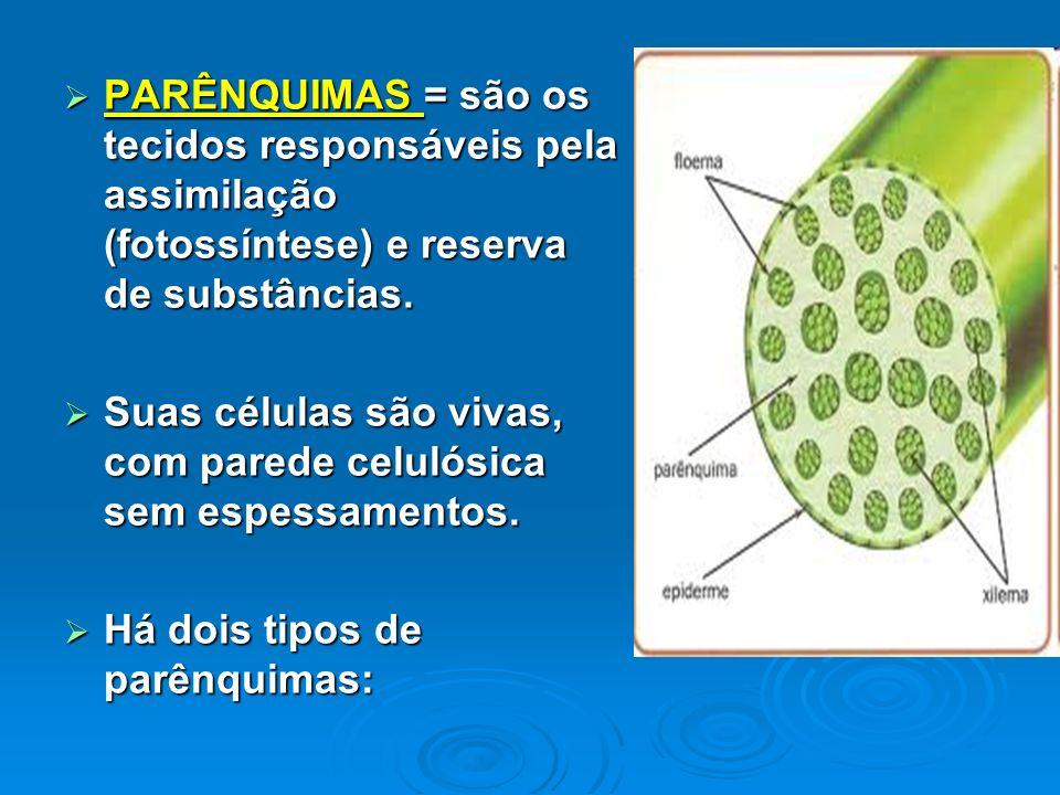 PARÊNQUIMAS = são os tecidos responsáveis pela assimilação (fotossíntese) e reserva de substâncias. PARÊNQUIMAS = são os tecidos responsáveis pela ass