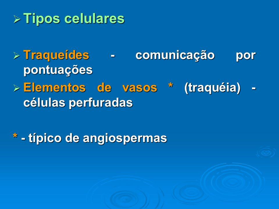 Tipos celulares Tipos celulares Traqueídes - comunicação por pontuações Traqueídes - comunicação por pontuações Elementos de vasos * (traquéia) - célu