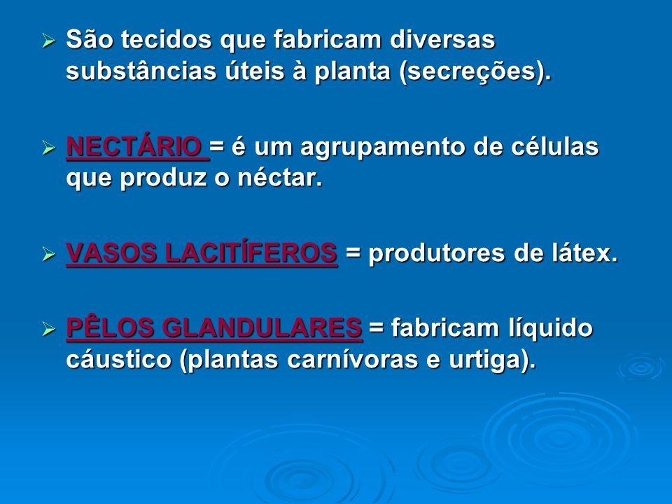 São tecidos que fabricam diversas substâncias úteis à planta (secreções). São tecidos que fabricam diversas substâncias úteis à planta (secreções). NE