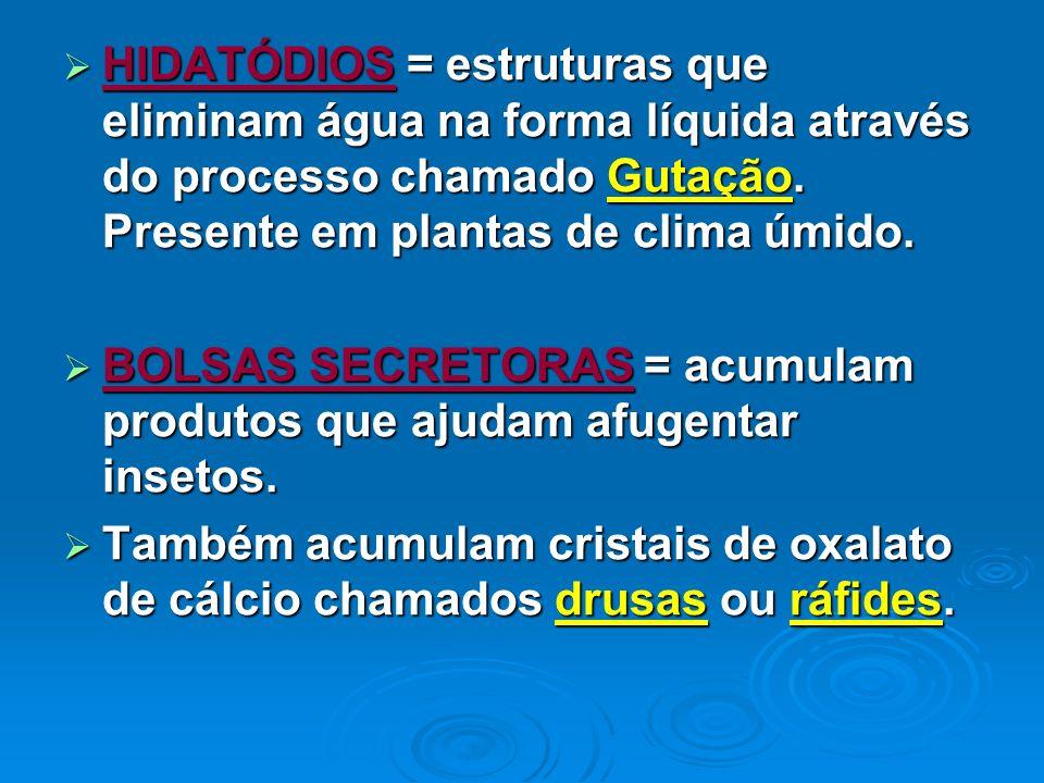HIDATÓDIOS = estruturas que eliminam água na forma líquida através do processo chamado Gutação. Presente em plantas de clima úmido. HIDATÓDIOS = estru