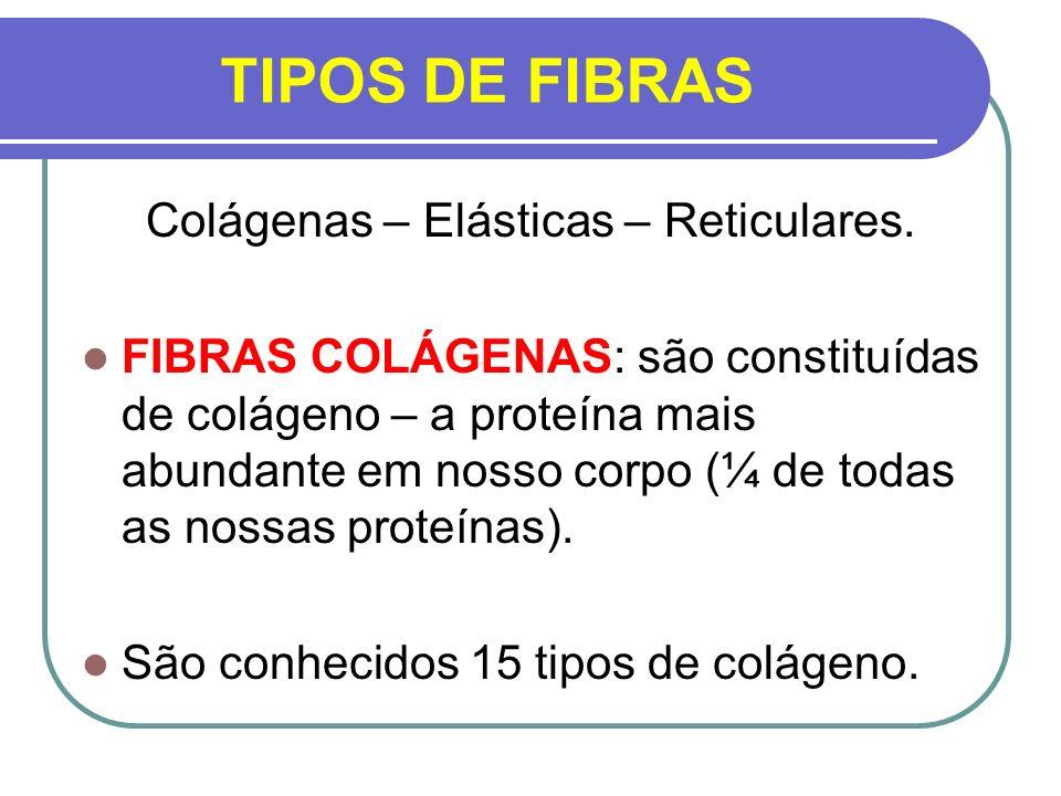 TIPOS DE FIBRAS Colágenas – Elásticas – Reticulares. FIBRAS COLÁGENAS: são constituídas de colágeno – a proteína mais abundante em nosso corpo (¼ de t