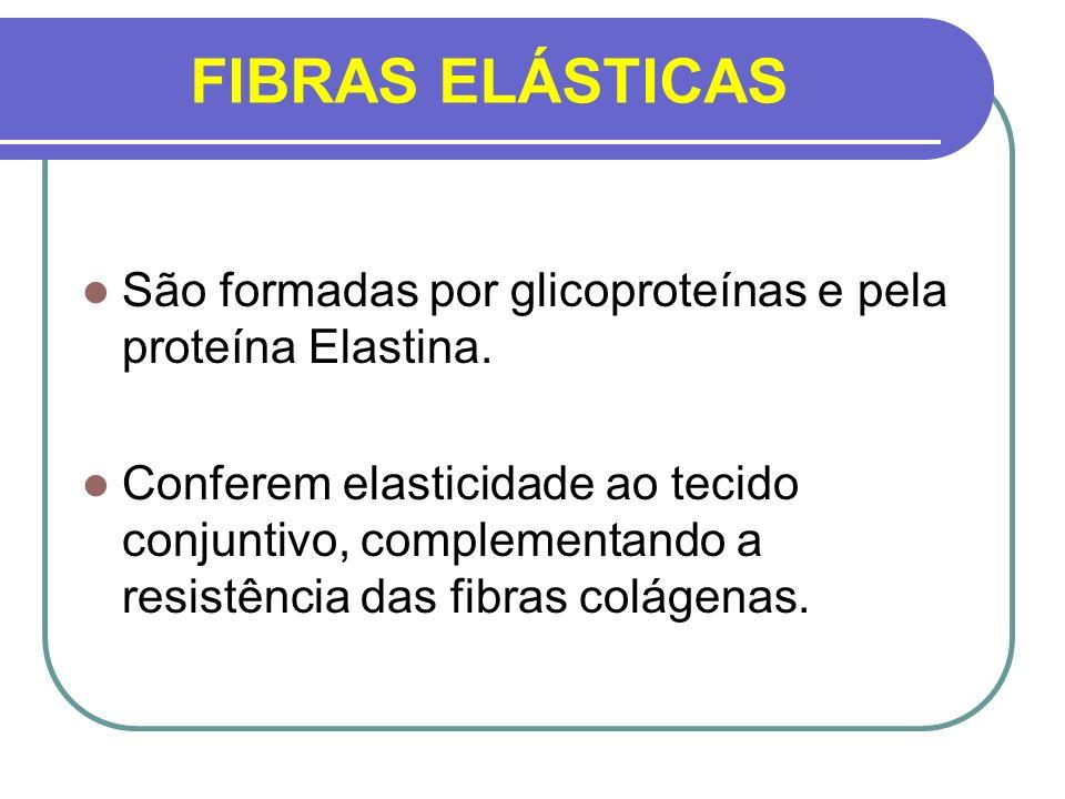 FIBRAS ELÁSTICAS São formadas por glicoproteínas e pela proteína Elastina. Conferem elasticidade ao tecido conjuntivo, complementando a resistência da