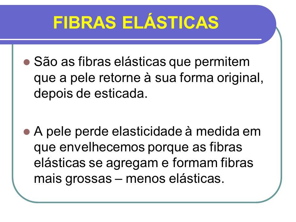 FIBRAS ELÁSTICAS São as fibras elásticas que permitem que a pele retorne à sua forma original, depois de esticada. A pele perde elasticidade à medida