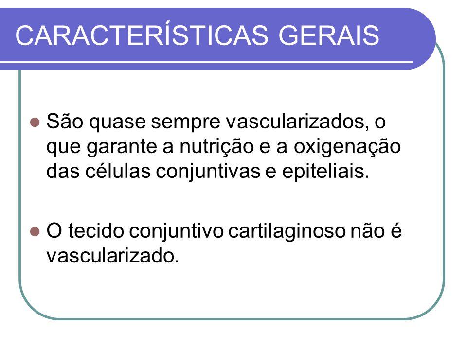 CARACTERÍSTICAS GERAIS São quase sempre vascularizados, o que garante a nutrição e a oxigenação das células conjuntivas e epiteliais. O tecido conjunt