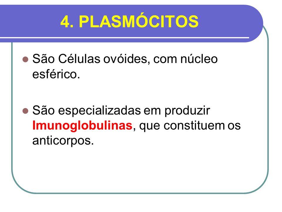 4. PLASMÓCITOS São Células ovóides, com núcleo esférico. São especializadas em produzir Imunoglobulinas, que constituem os anticorpos.