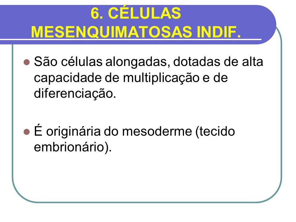 6. CÉLULAS MESENQUIMATOSAS INDIF. São células alongadas, dotadas de alta capacidade de multiplicação e de diferenciação. É originária do mesoderme (te