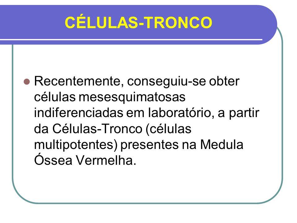 CÉLULAS-TRONCO Recentemente, conseguiu-se obter células mesesquimatosas indiferenciadas em laboratório, a partir da Células-Tronco (células multipoten