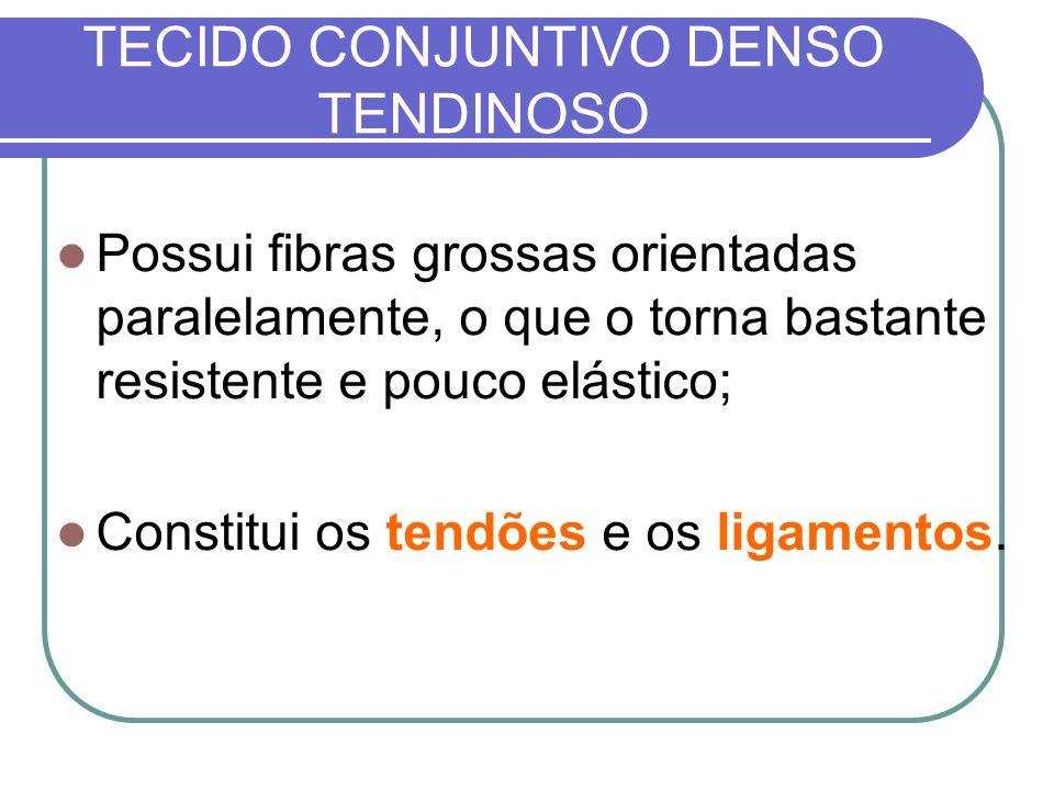 TECIDO CONJUNTIVO DENSO TENDINOSO Possui fibras grossas orientadas paralelamente, o que o torna bastante resistente e pouco elástico; Constitui os ten