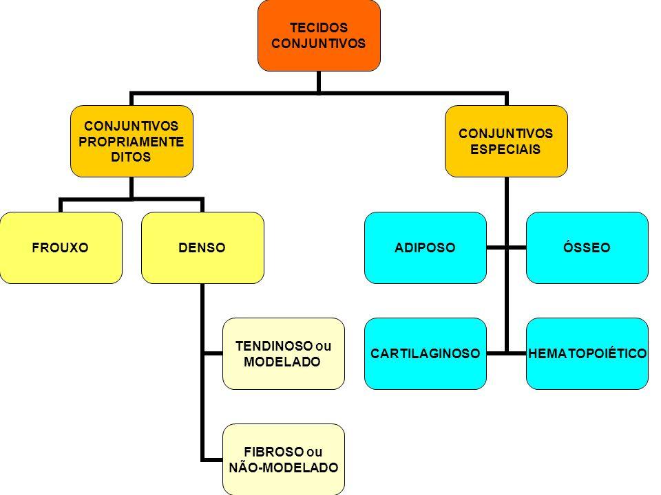 TECIDOS CONJUNTIVOS PROPRIAMENTE DITOS FROUXODENSO TENDINOSO ou MODELADO FIBROSO ou NÃO-MODELADO CONJUNTIVOS ESPECIAIS ADIPOSOÓSSEO CARTILAGINOSOHEMAT