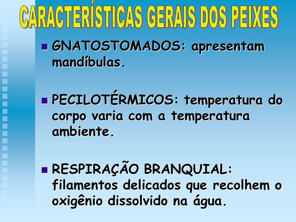 GNATOSTOMADOS: apresentam mandíbulas. GNATOSTOMADOS: apresentam mandíbulas. PECILOTÉRMICOS: temperatura do corpo varia com a temperatura ambiente. PEC