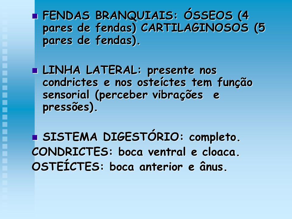 FENDAS BRANQUIAIS: ÓSSEOS (4 pares de fendas) CARTILAGINOSOS (5 pares de fendas). FENDAS BRANQUIAIS: ÓSSEOS (4 pares de fendas) CARTILAGINOSOS (5 pare