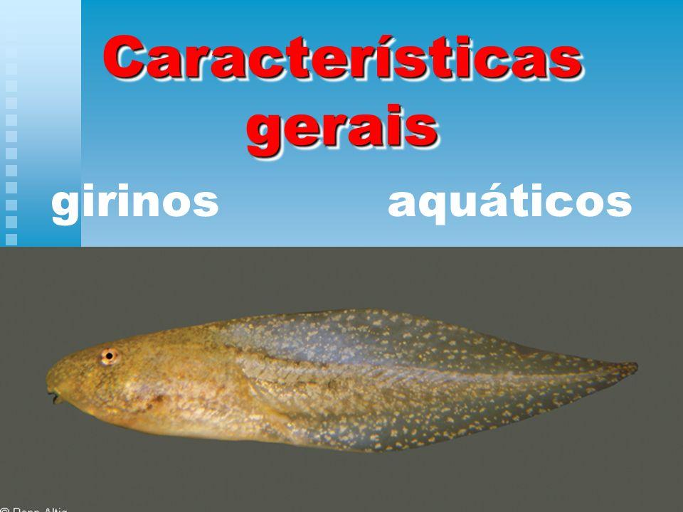Características gerais girinos aquáticos