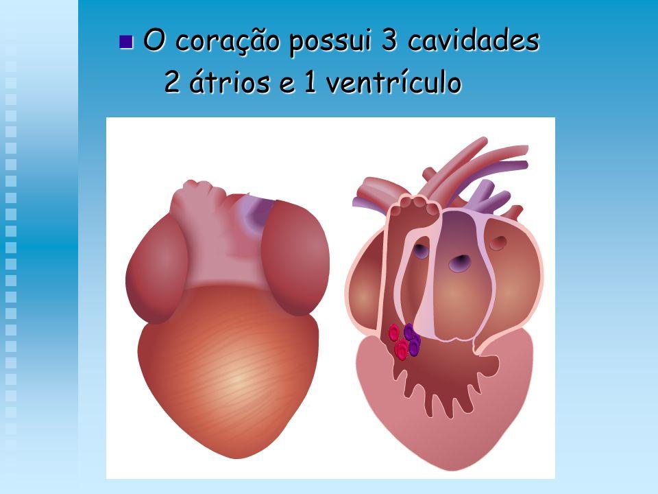 O coração possui 3 cavidades O coração possui 3 cavidades 2 átrios e 1 ventrículo 2 átrios e 1 ventrículo