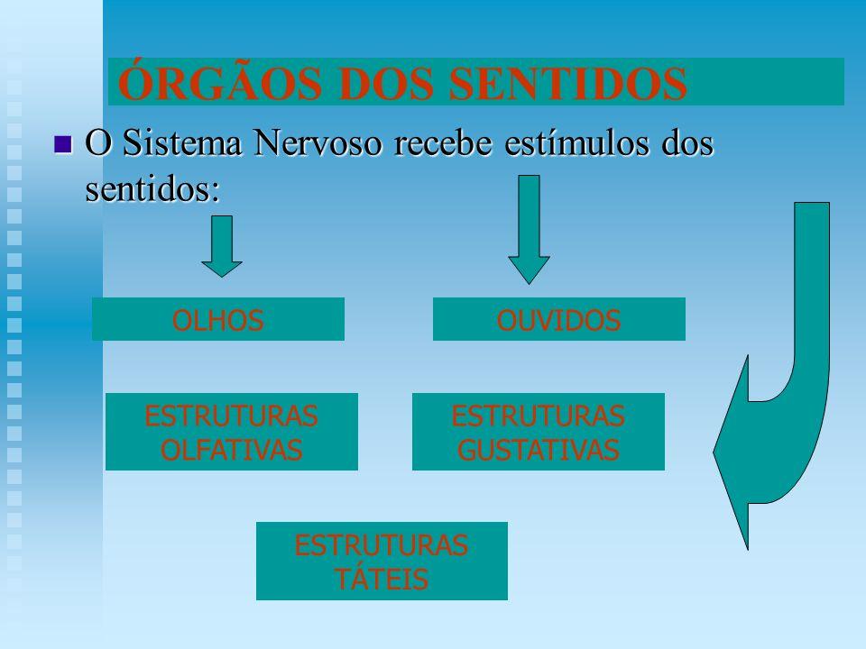 O Sistema Nervoso recebe estímulos dos sentidos: O Sistema Nervoso recebe estímulos dos sentidos: ÓRGÃOS DOS SENTIDOS OLHOSOUVIDOS ESTRUTURAS OLFATIVA