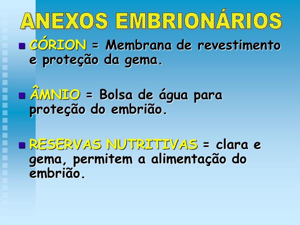 CÓRION = Membrana de revestimento e proteção da gema. CÓRION = Membrana de revestimento e proteção da gema. ÂMNIO = Bolsa de água para proteção do emb