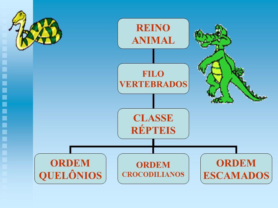 REINO ANIMAL FILO VERTEBRADOS CLASSE RÉPTEIS ORDEM QUELÔNIOS ORDEM CROCODILIANOS ORDEM ESCAMADOS