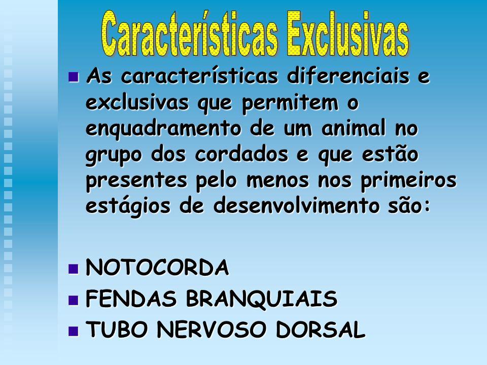 As características diferenciais e exclusivas que permitem o enquadramento de um animal no grupo dos cordados e que estão presentes pelo menos nos prim