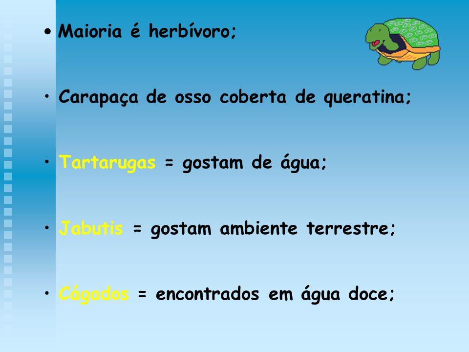 Maioria é herbívoro; Carapaça de osso coberta de queratina; Tartarugas = gostam de água; Jabutis = gostam ambiente terrestre; Cágados = encontrados em