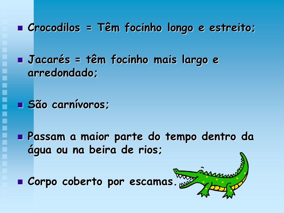 Crocodilos = Têm focinho longo e estreito; Crocodilos = Têm focinho longo e estreito; Jacarés = têm focinho mais largo e arredondado; Jacarés = têm fo