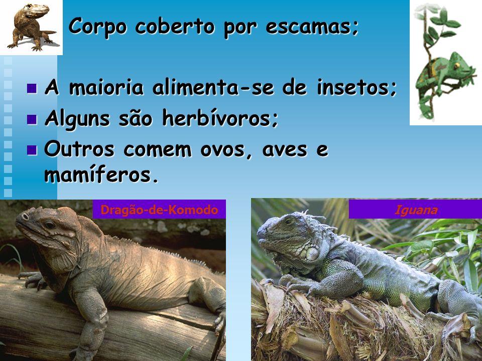 Corpo coberto por escamas; Corpo coberto por escamas; A maioria alimenta-se de insetos; A maioria alimenta-se de insetos; Alguns são herbívoros; Algun