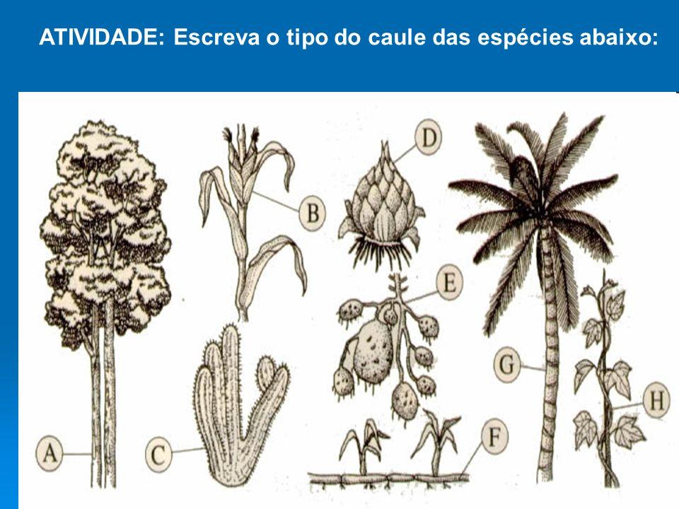 ATIVIDADE: Escreva o tipo do caule das espécies abaixo: