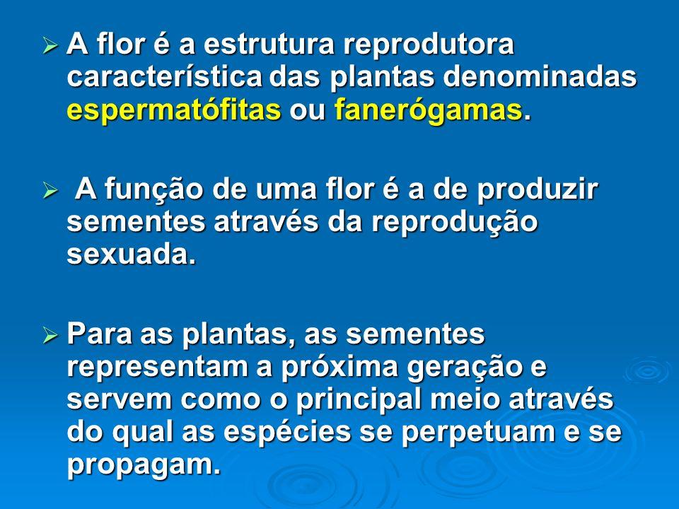 A flor é a estrutura reprodutora característica das plantas denominadas espermatófitas ou fanerógamas. A flor é a estrutura reprodutora característica