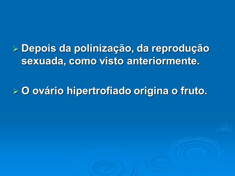 Depois da polinização, da reprodução sexuada, como visto anteriormente. Depois da polinização, da reprodução sexuada, como visto anteriormente. O ovár