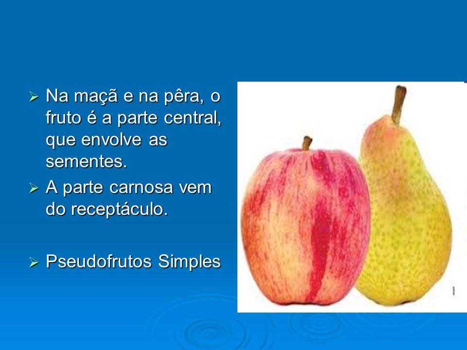 Na maçã e na pêra, o fruto é a parte central, que envolve as sementes. Na maçã e na pêra, o fruto é a parte central, que envolve as sementes. A parte
