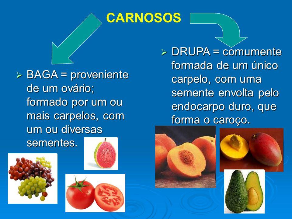 CARNOSOS BAGA = proveniente de um ovário; formado por um ou mais carpelos, com um ou diversas sementes. BAGA = proveniente de um ovário; formado por u
