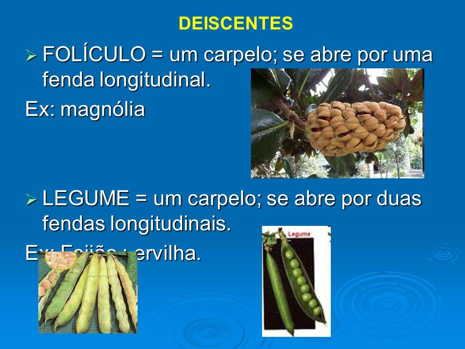 FOLÍCULO = um carpelo; se abre por uma fenda longitudinal. FOLÍCULO = um carpelo; se abre por uma fenda longitudinal. Ex: magnólia LEGUME = um carpelo
