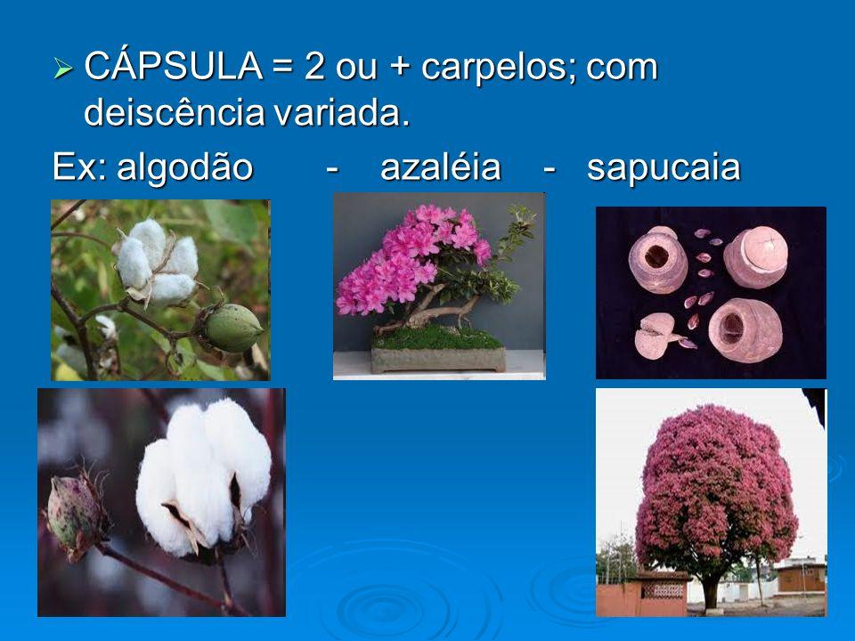 CÁPSULA = 2 ou + carpelos; com deiscência variada. CÁPSULA = 2 ou + carpelos; com deiscência variada. Ex: algodão - azaléia - sapucaia