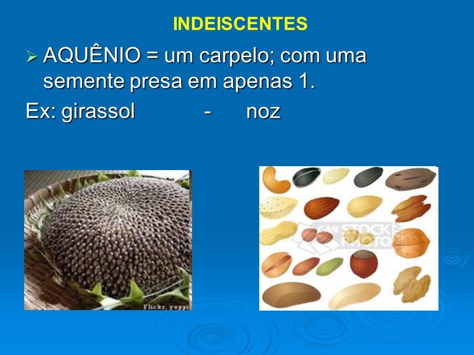 AQUÊNIO = um carpelo; com uma semente presa em apenas 1. AQUÊNIO = um carpelo; com uma semente presa em apenas 1. Ex: girassol - noz INDEISCENTES