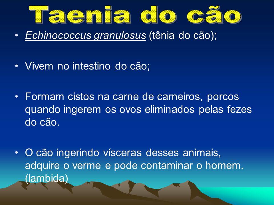 Echinococcus granulosus (tênia do cão); Vivem no intestino do cão; Formam cistos na carne de carneiros, porcos quando ingerem os ovos eliminados pelas