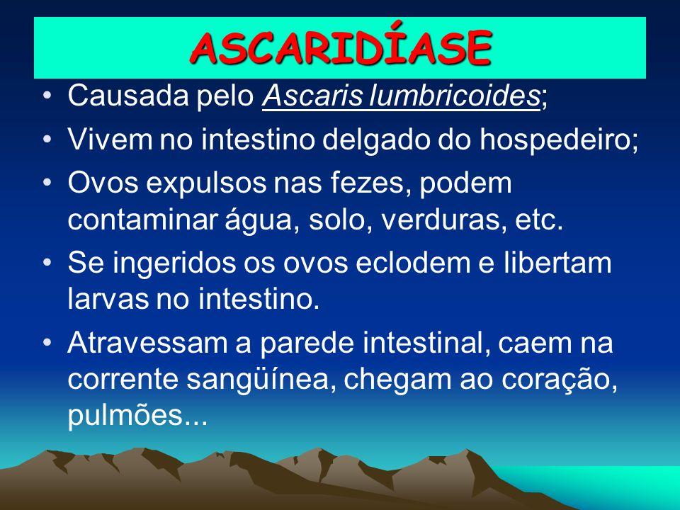 ASCARIDÍASE Causada pelo Ascaris lumbricoides; Vivem no intestino delgado do hospedeiro; Ovos expulsos nas fezes, podem contaminar água, solo, verdura