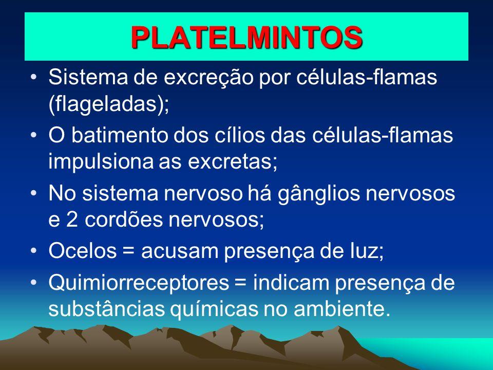 PLATELMINTOS Sistema de excreção por células-flamas (flageladas); O batimento dos cílios das células-flamas impulsiona as excretas; No sistema nervoso