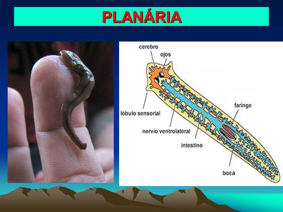 PLANÁRIA
