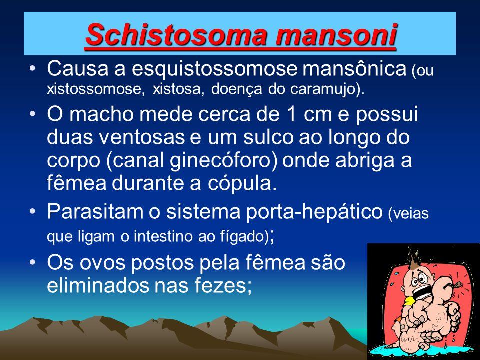 Schistosoma mansoni Causa a esquistossomose mansônica (ou xistossomose, xistosa, doença do caramujo). O macho mede cerca de 1 cm e possui duas ventosa
