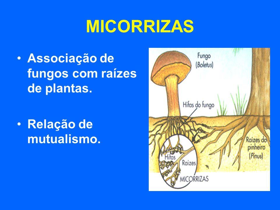 Associação de fungos com raízes de plantas. Relação de mutualismo.