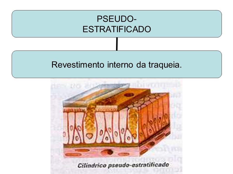 PSEUDO- ESTRATIFICADO Revestimento interno da traqueia.
