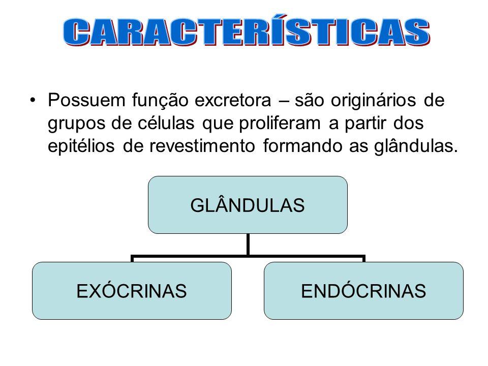 Possuem função excretora – são originários de grupos de células que proliferam a partir dos epitélios de revestimento formando as glândulas. GLÂNDULAS