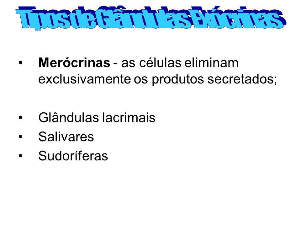 Merócrinas - as células eliminam exclusivamente os produtos secretados; Glândulas lacrimais Salivares Sudoríferas