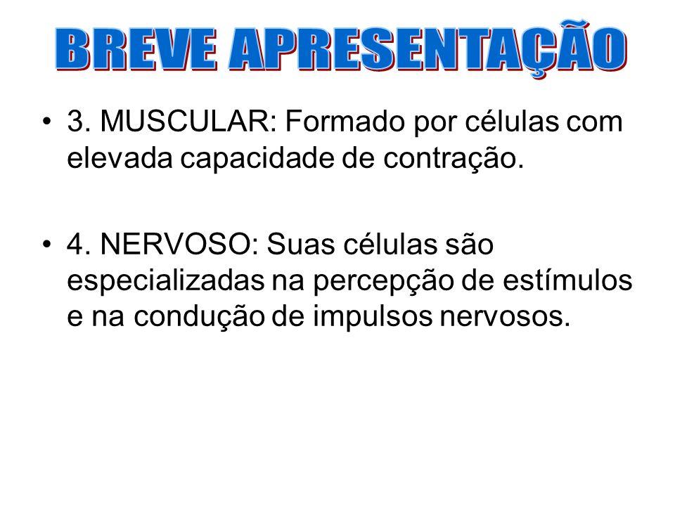 3. MUSCULAR: Formado por células com elevada capacidade de contração. 4. NERVOSO: Suas células são especializadas na percepção de estímulos e na condu