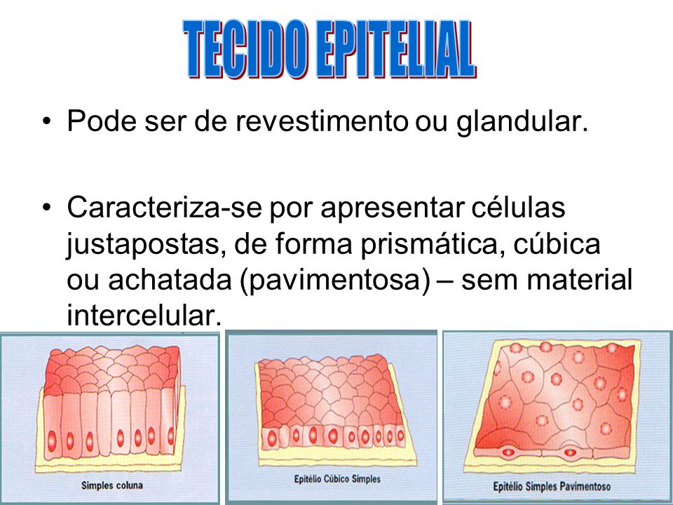 Pode ser de revestimento ou glandular. Caracteriza-se por apresentar células justapostas, de forma prismática, cúbica ou achatada (pavimentosa) – sem