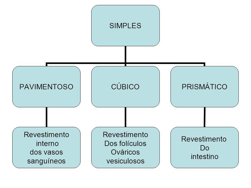 SIMPLES PAVIMENTOSO Revestimento interno dos vasos sanguíneos CÚBICO Revestimento Dos folículos Ováricos vesiculosos PRISMÁTICO Revestimento Do intest