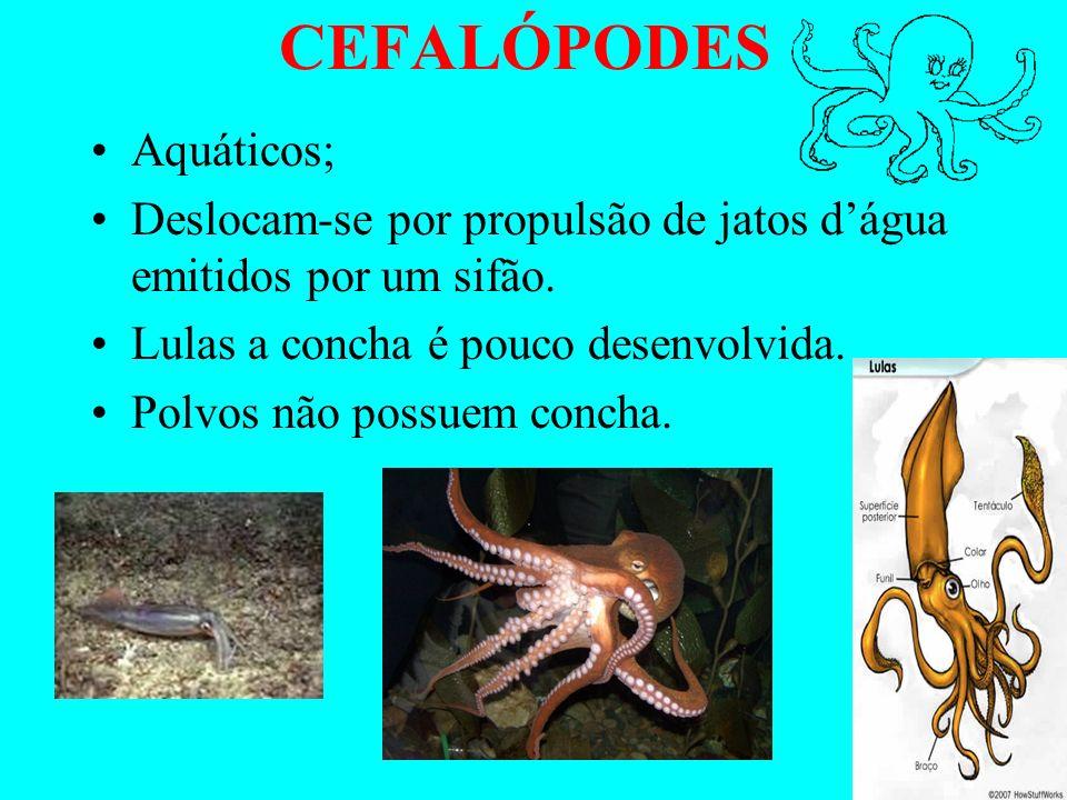 GASTRÓPODES Pés localizam-se na região ventral; Alguns possuem concha enrolada em espiral Outros não tem concha (lesmas).