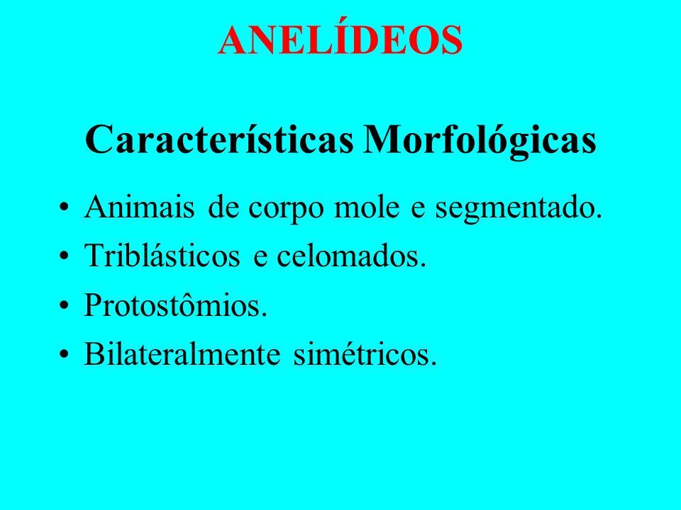 PROFª MARCIA CONCEIÇÃO DE SOUZA SILVA www.marciasilvaquimica.wikispaces.com FILOS DO REINO ANIMAL ANELÍDEOSMOLUSCOSEQUINODERMAS