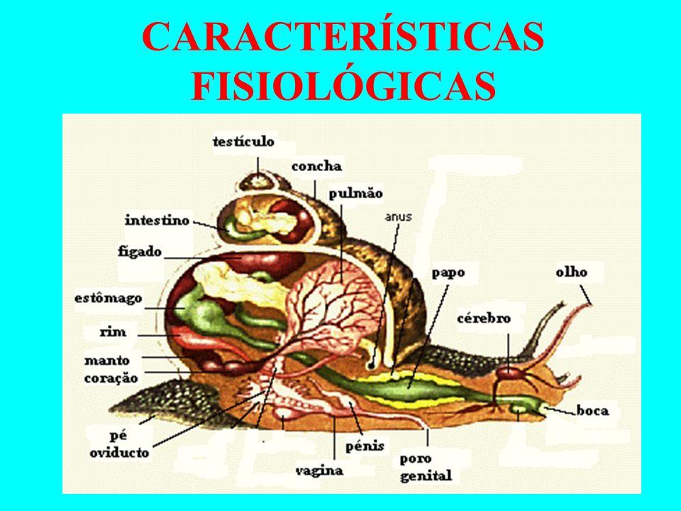 Reprodução Há espécies com sexos separados e outras hermafroditas; Fecundação Pode ser interna ou externa com desenvolvimento direto ou indireto ocorre formação de larva.