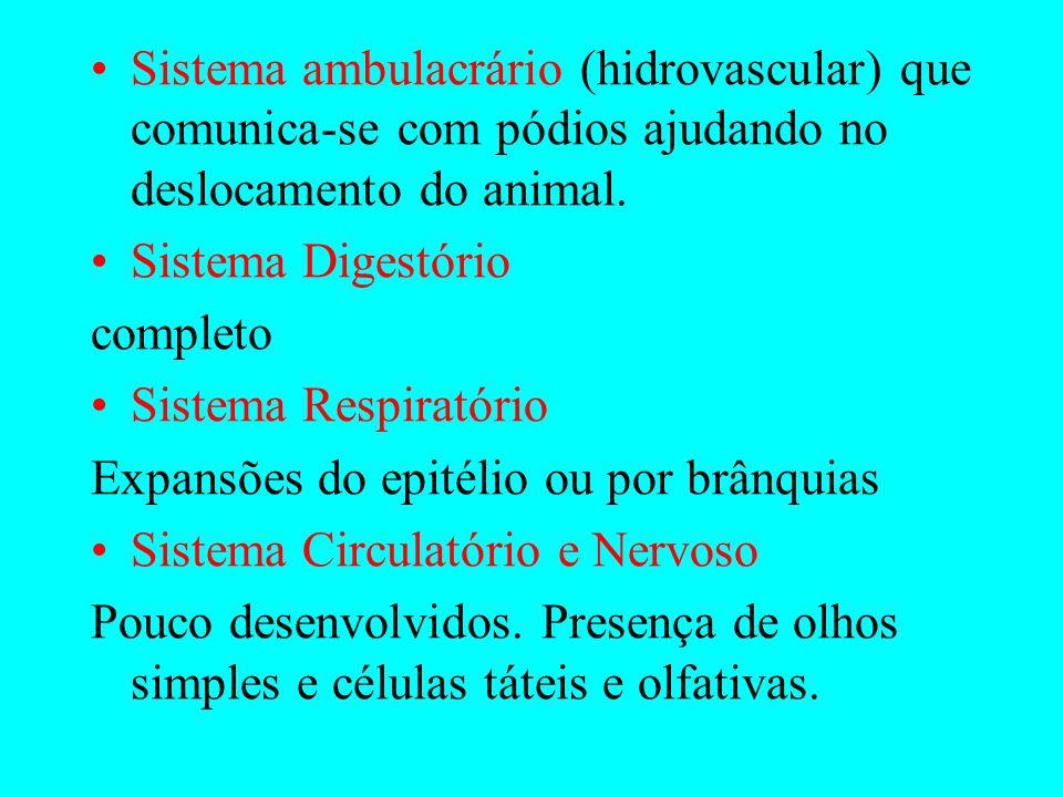 EQUINODERMAS Marinhos e de vida livre; Presença de espinhos na pele; Triblásticos; Celomados; Deuterostômios; Apresentam endoesqueleto.