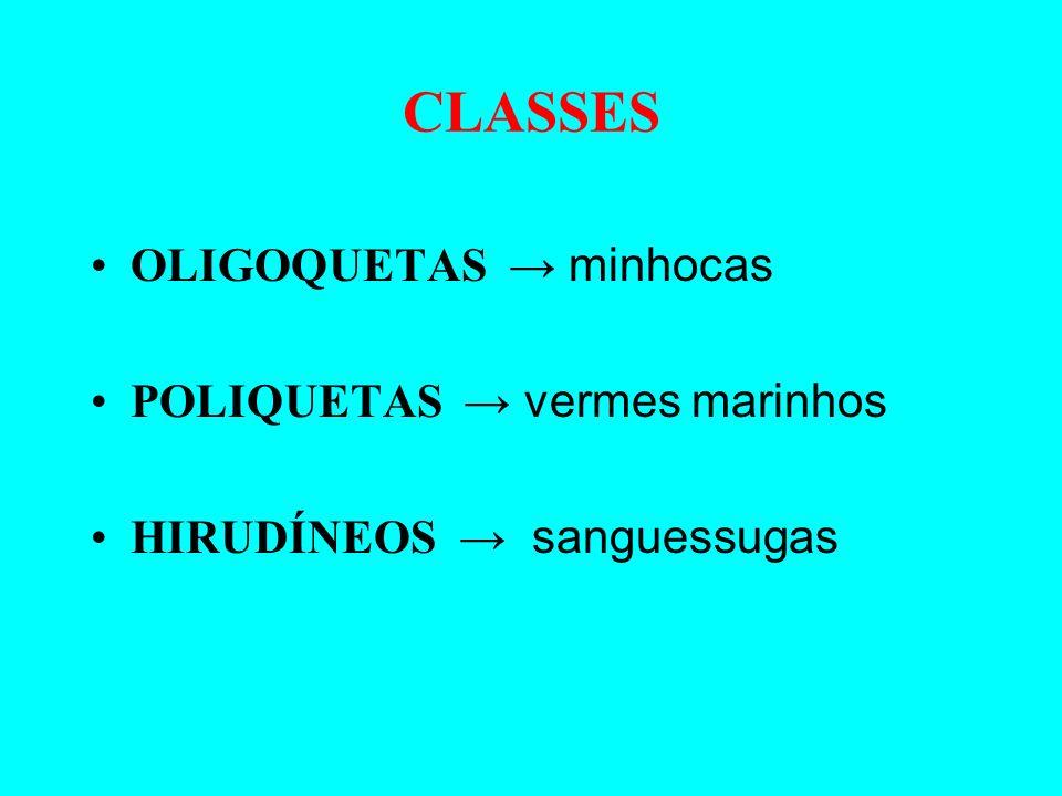 ANELÍDEOS Características Morfológicas Animais de corpo mole e segmentado.