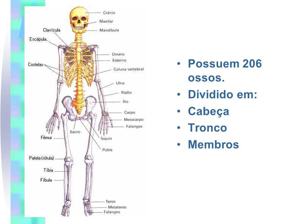 Possuem 206 ossos. Dividido em: Cabeça Tronco Membros